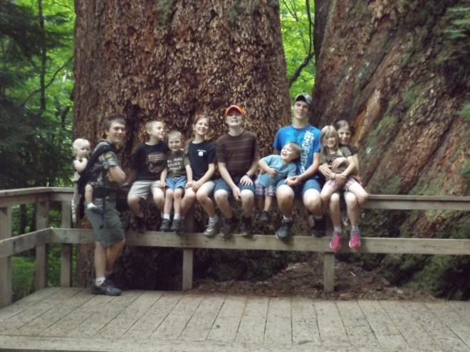The kids in front of some of the large trees in the Grove of the Patriarchs at Mt. Rainier.