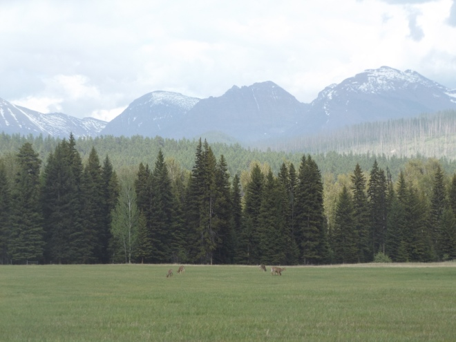 Deer grazing in a meadow.