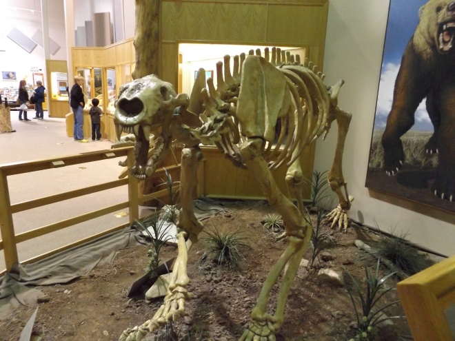 Skeleton of Giant Short-Faced Bear