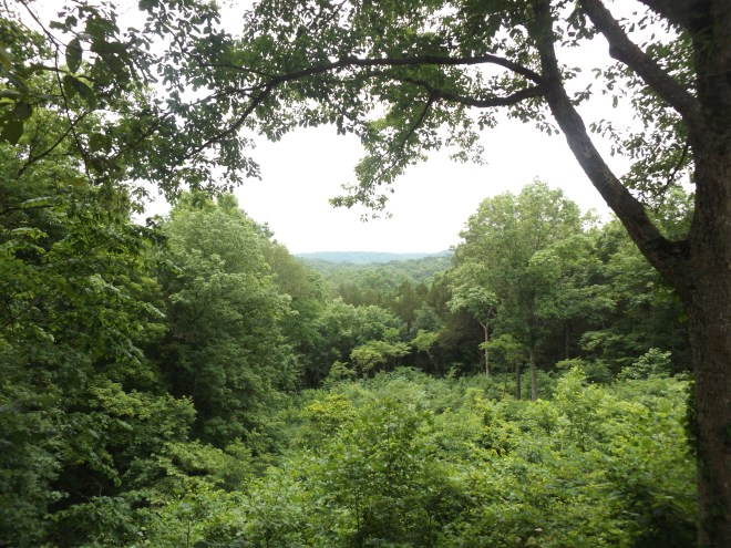 View of Kentucky in Mammoth Cave National Park.  I'm so glad to see hardwood forests again!